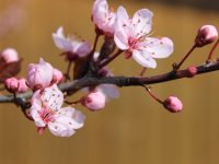 Frühlingsfreuden