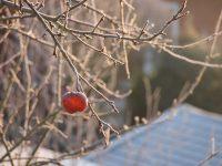 Hilflos im Schnee
