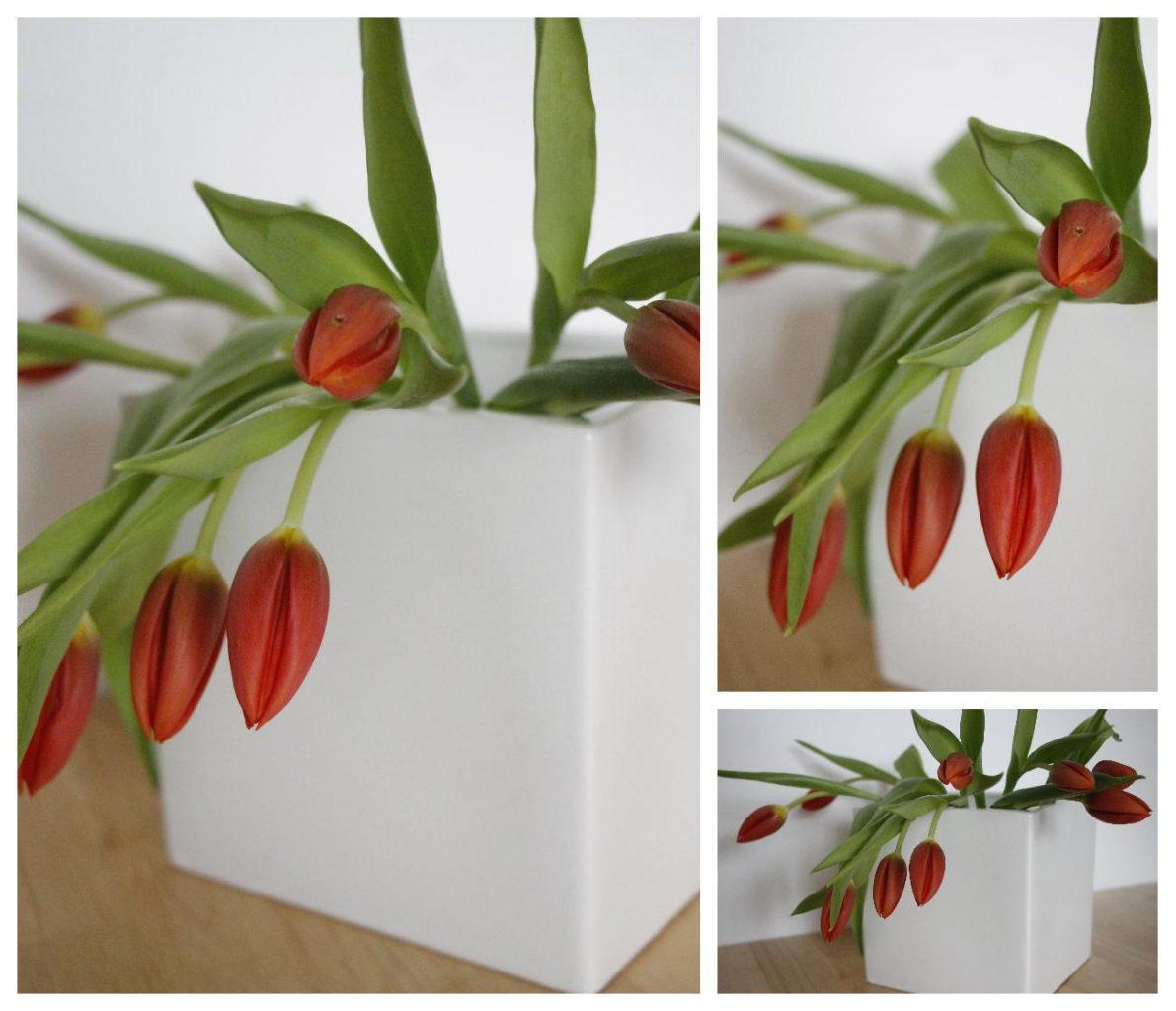 weißer Blumentopf