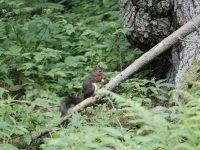 Urlaub im Schwarzwald: Ein Natur- und Kulturschock