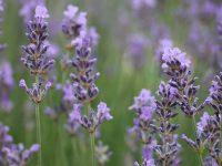 TOP 5 Tipps, die den Garten in eine Wohlfühloase verwandeln
