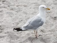 11 Dinge, die unbedingt mit an den Strand müssen