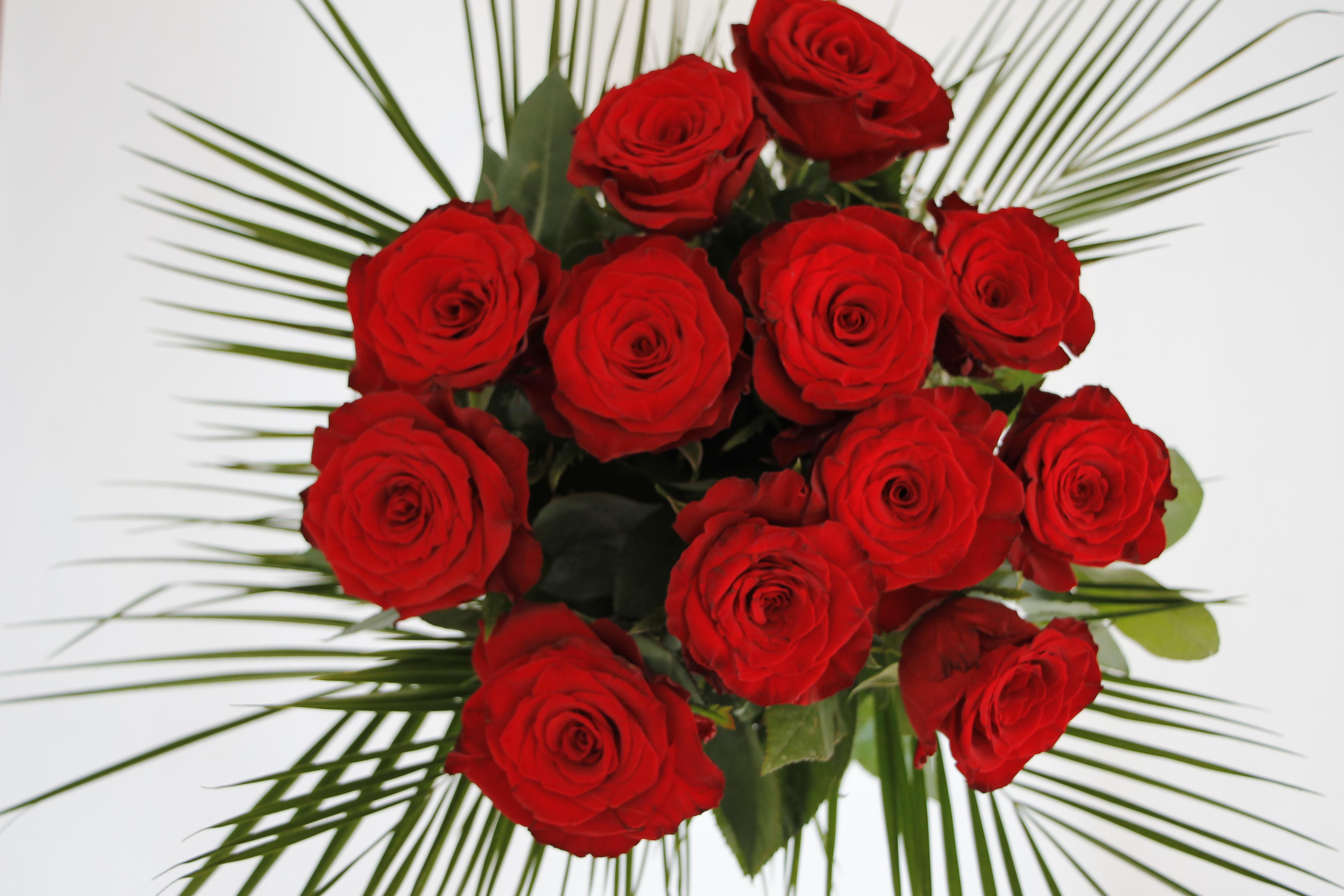 Blumen Online Verschicken Mit Floraqueen Lavendelblog