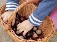Kindermode für den Herbst von bellybutton