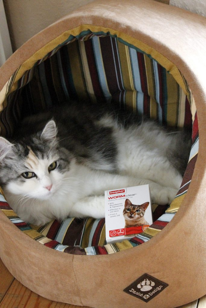 Omlet Katzenbett