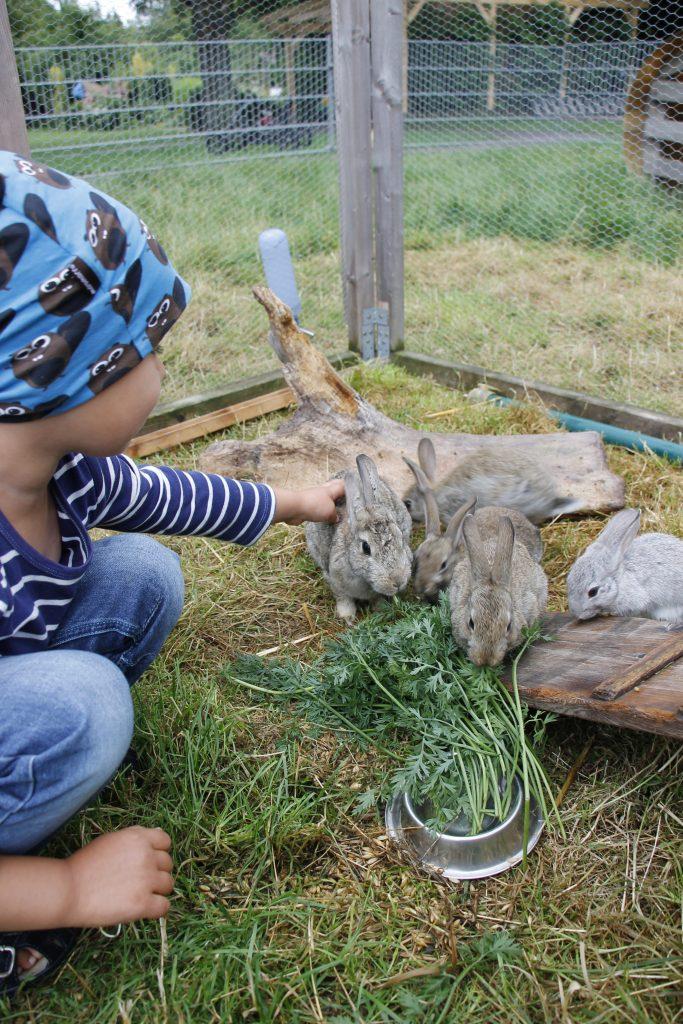 Haustier für Kinder Kaninchen