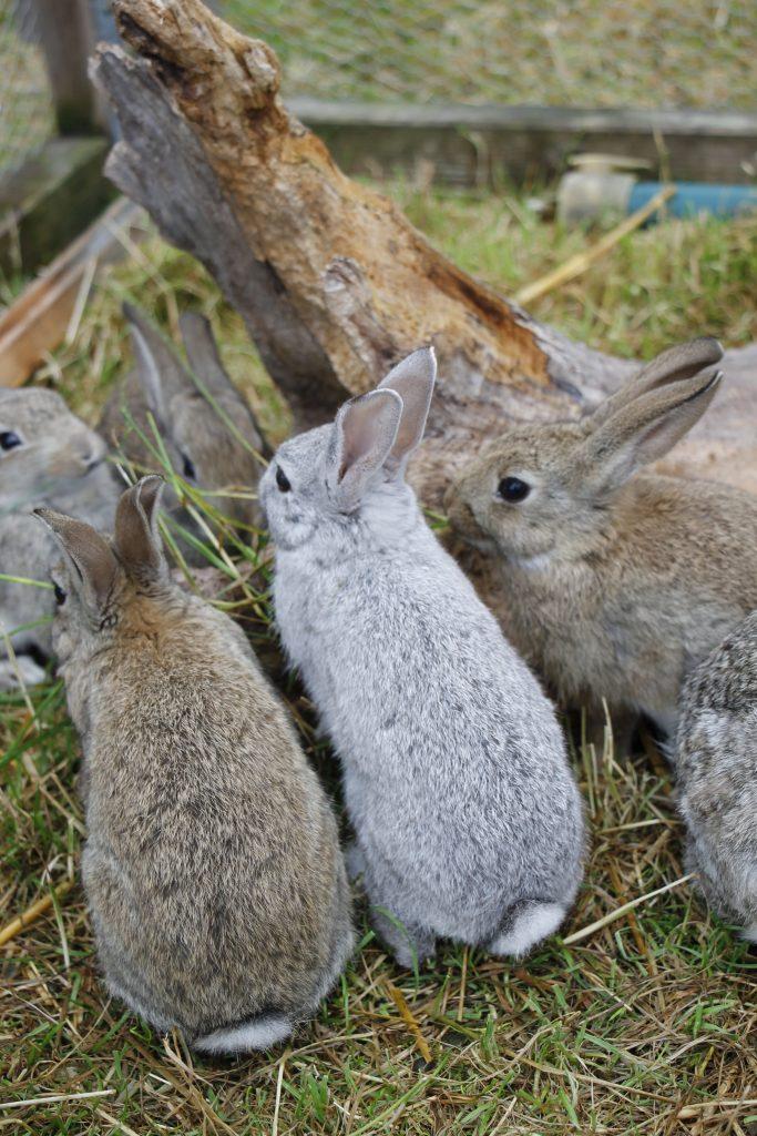 Kaninchen als Weihnachtsgeschenk