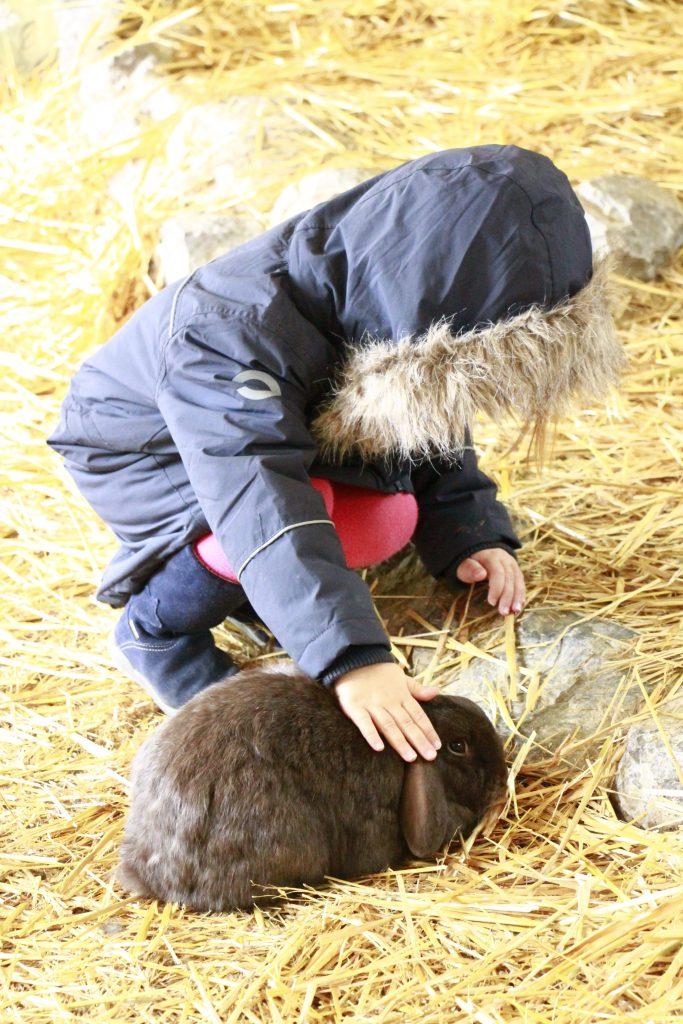 Familotel Sonnenpark Tiere