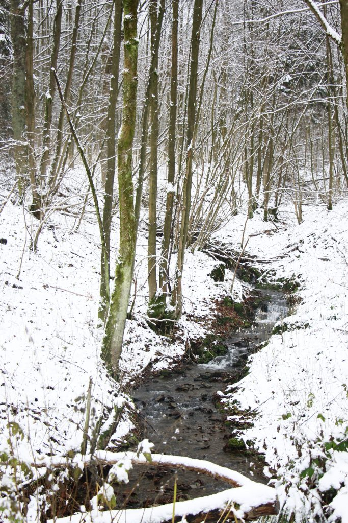 Winter Fluss