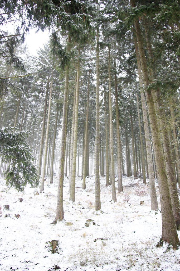 Winterlandschaft Bäume
