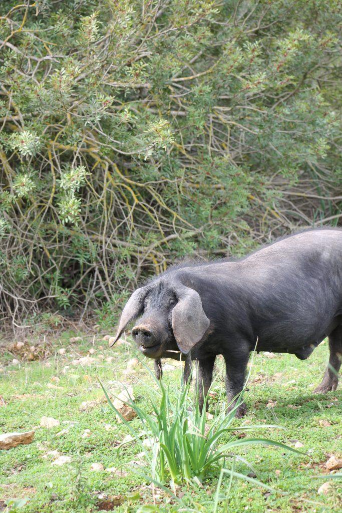 öffentliches Landgut Mallorca Tipps