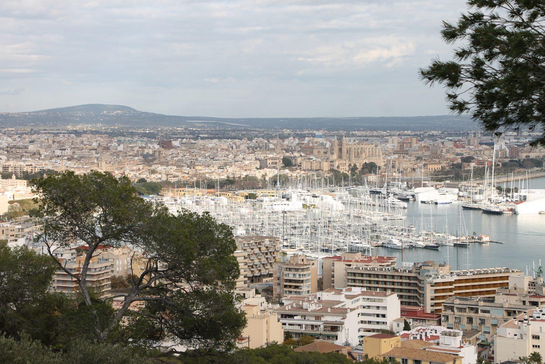 Ausblick über Palma Tipp