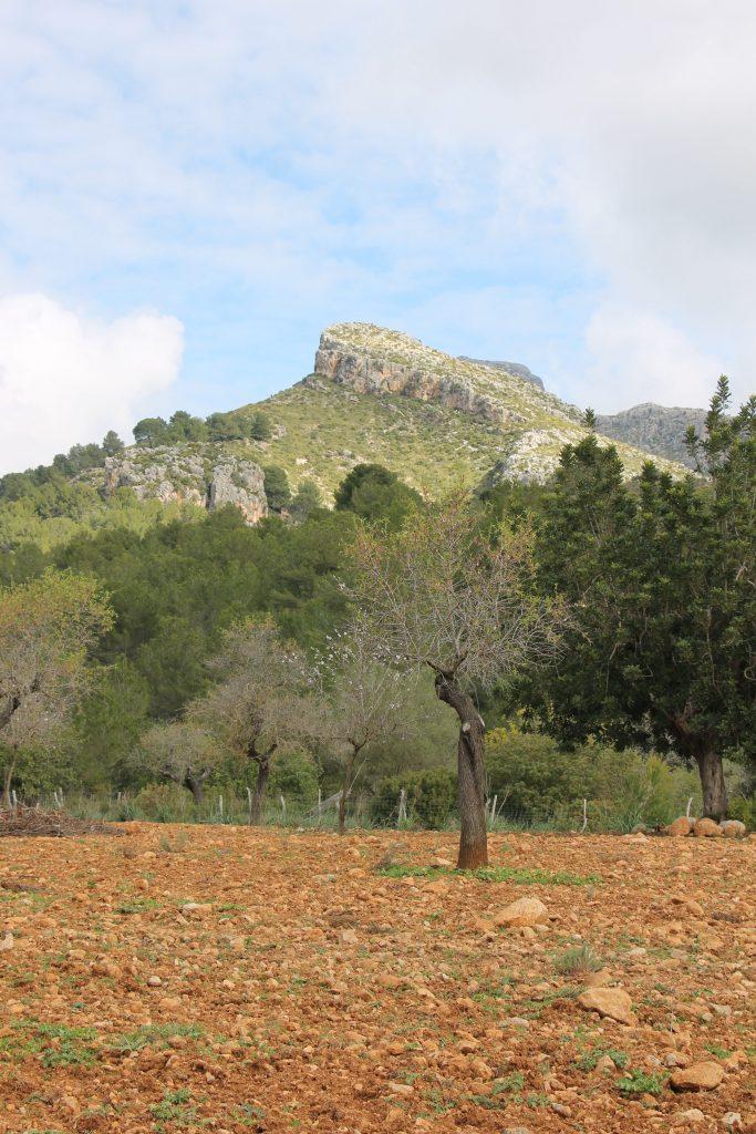 Finca Pública de Galatzó Sehenswürdigkeiten Mallorca Südwesten