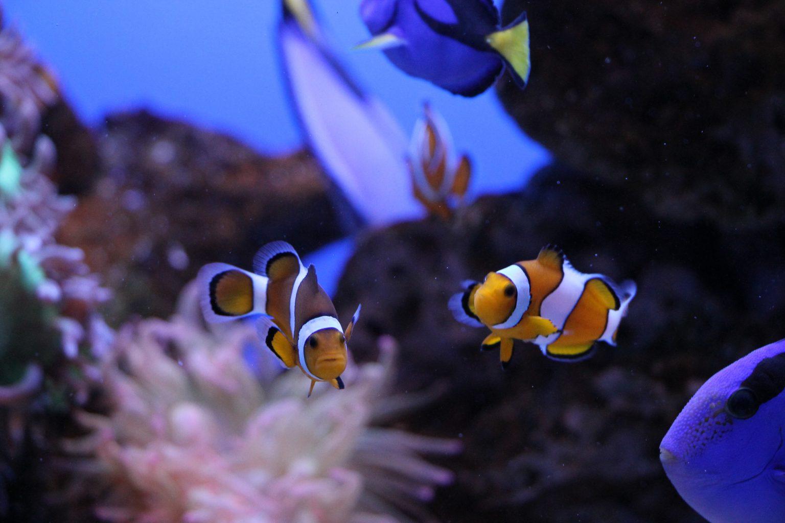 Palma Aquarium Erfahrung