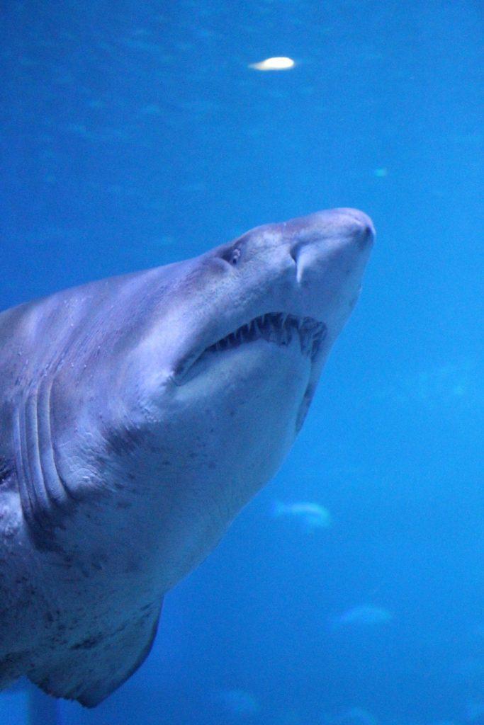 Palma Aquarium Erfahrungen