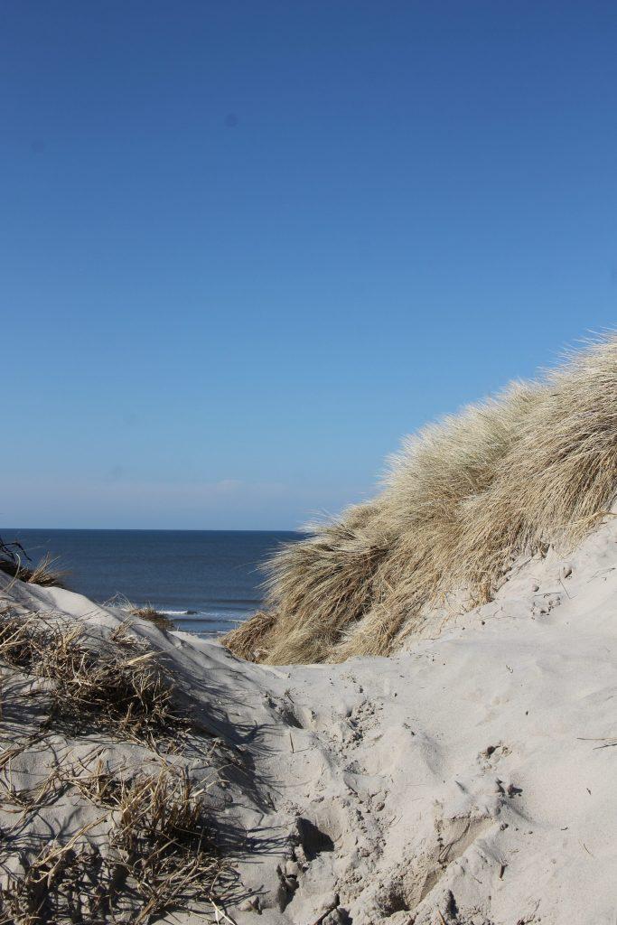 hohe Dünen Dänemark
