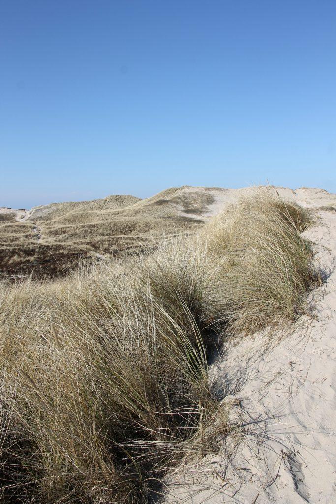 schönster Strand Westküste Dänemark