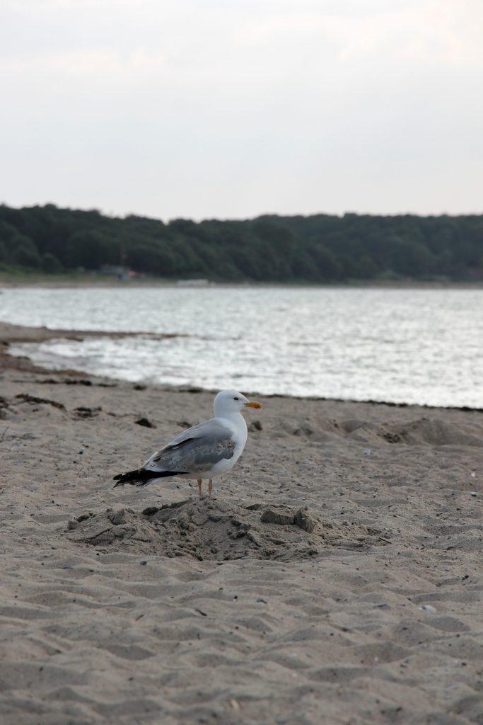 Ostsee Urlaub mit Kindern buchen