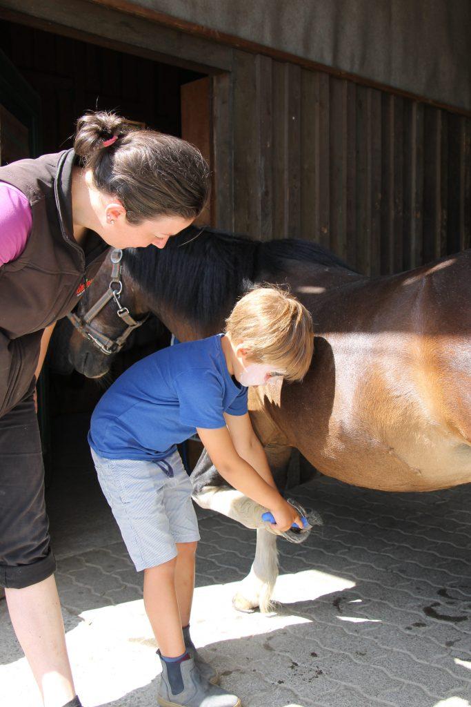 Familotel Ebbinghof Pferde