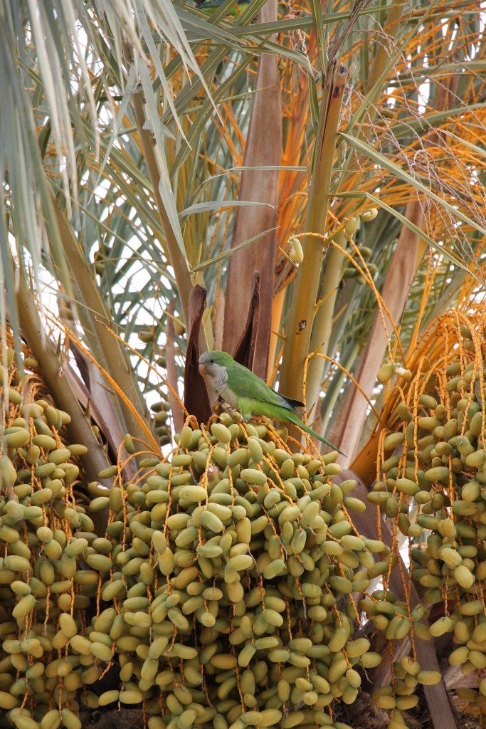 Palmen Costa Dorada