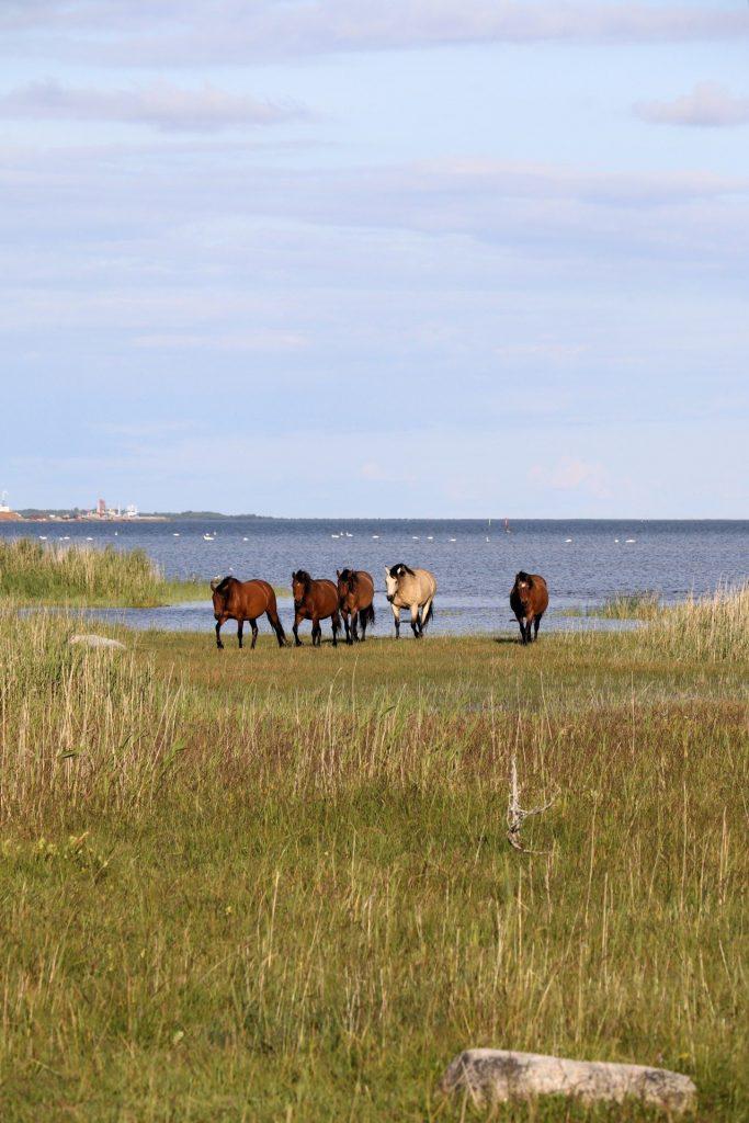 Saaremaa Tipps