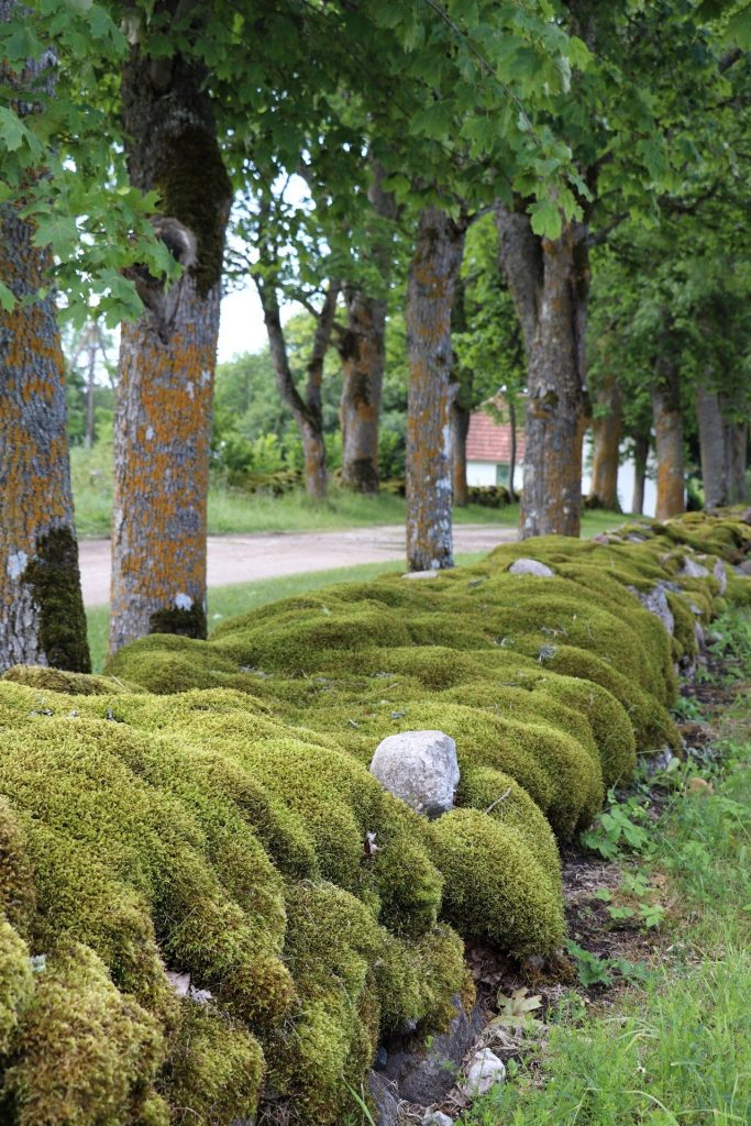 Urlaub Saaremaa Estland