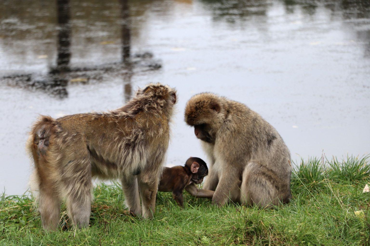 Givskud Zoo Zootopia