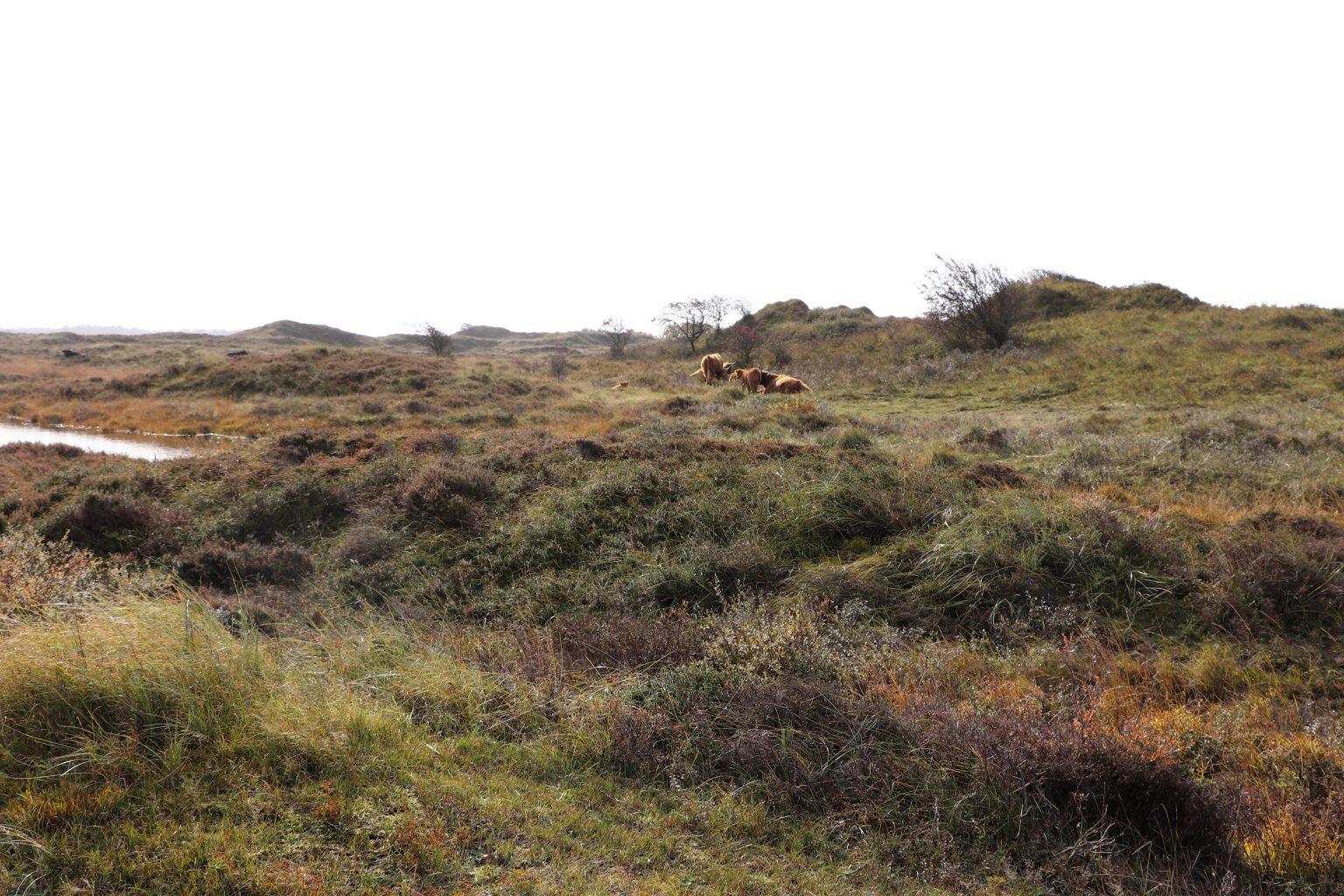 Rømø Heide