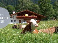 Naturpark Ammergauer Alpen: Urlaub zwischen Natur und Kultur