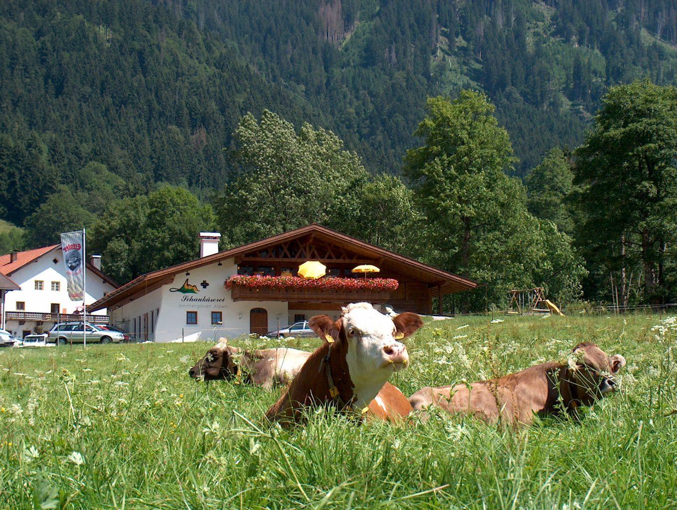Schaukäs+Kuh Hanspeter Schoene