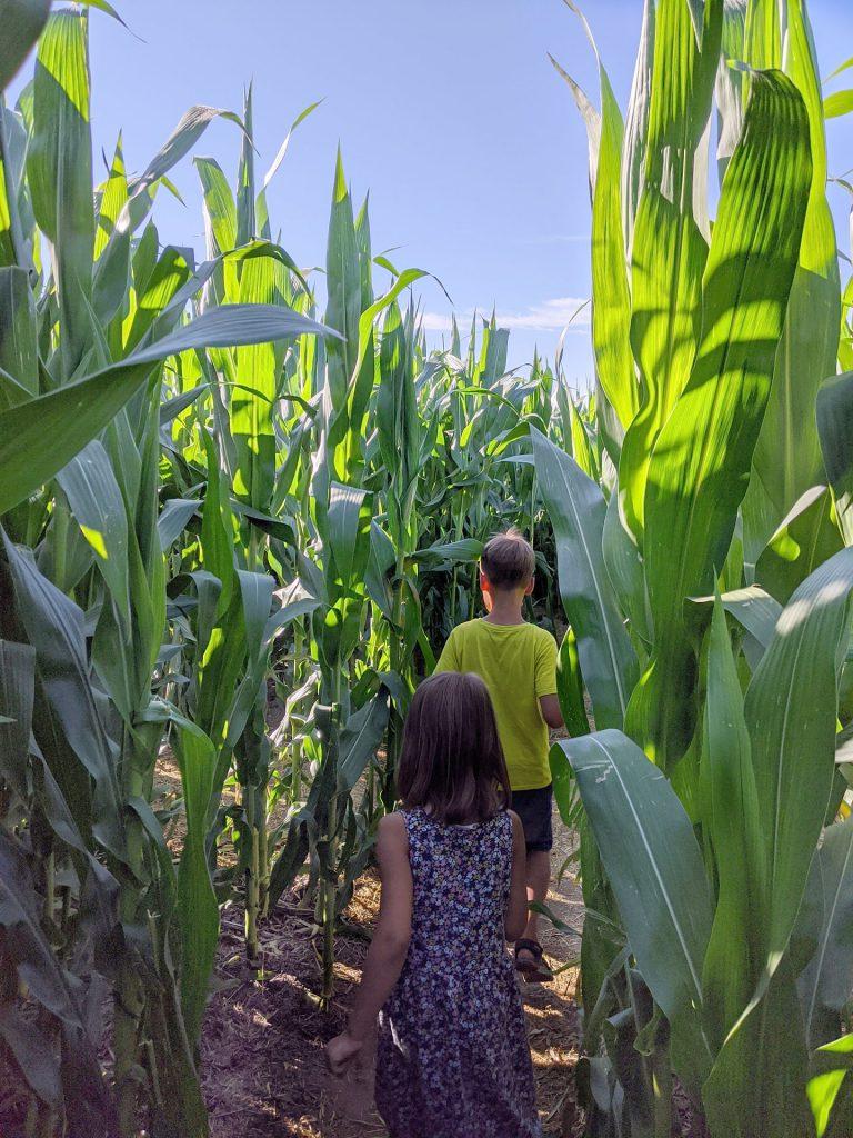 Rügen Maislabyrinth