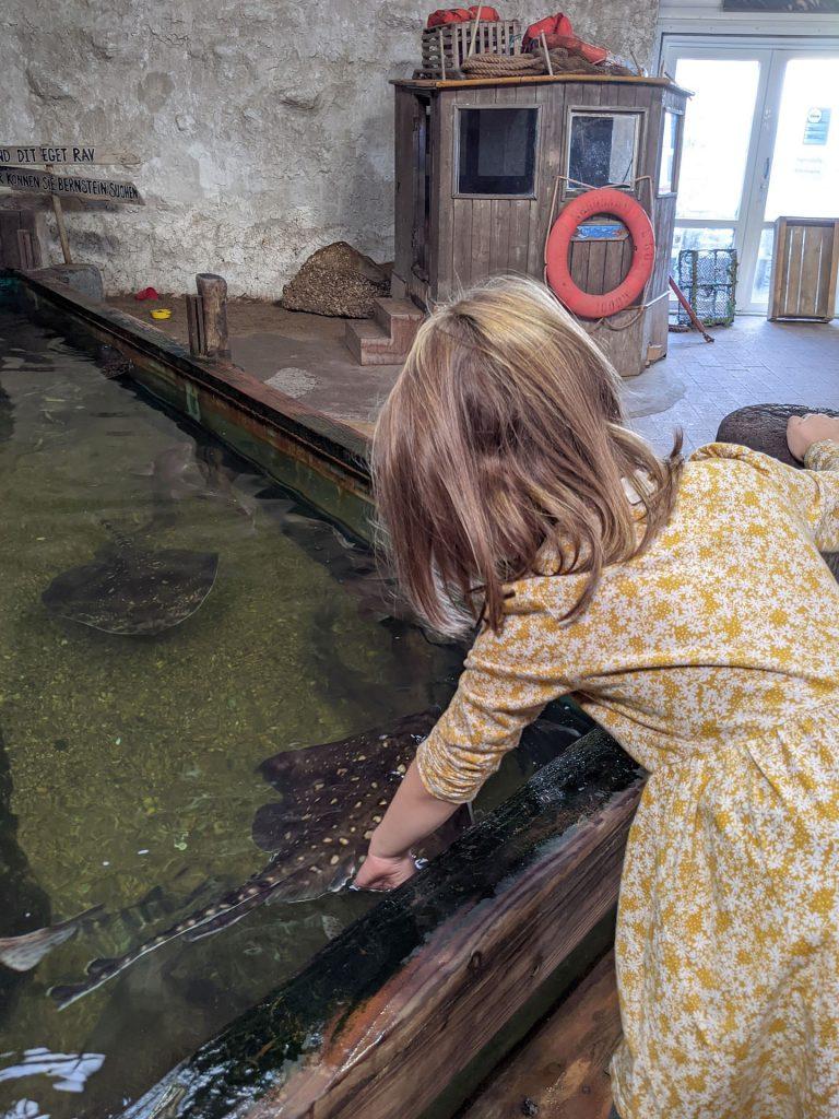 Aquarium Thyborøn Streichelbecken