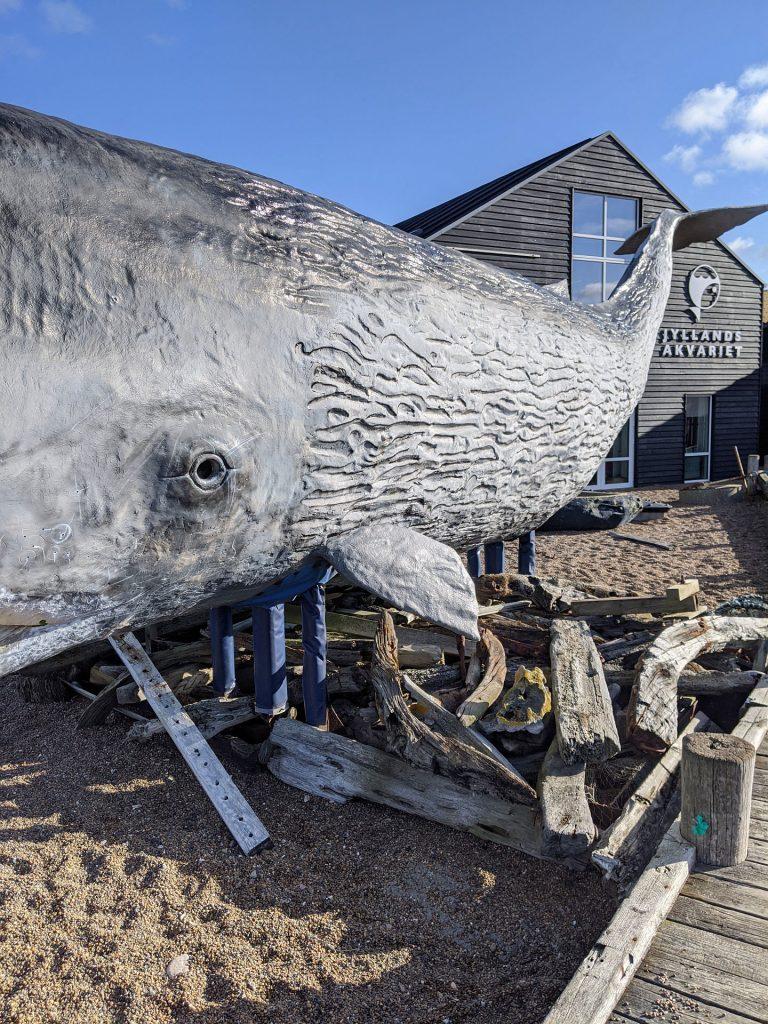 Thyborøn Aquarium Tipps