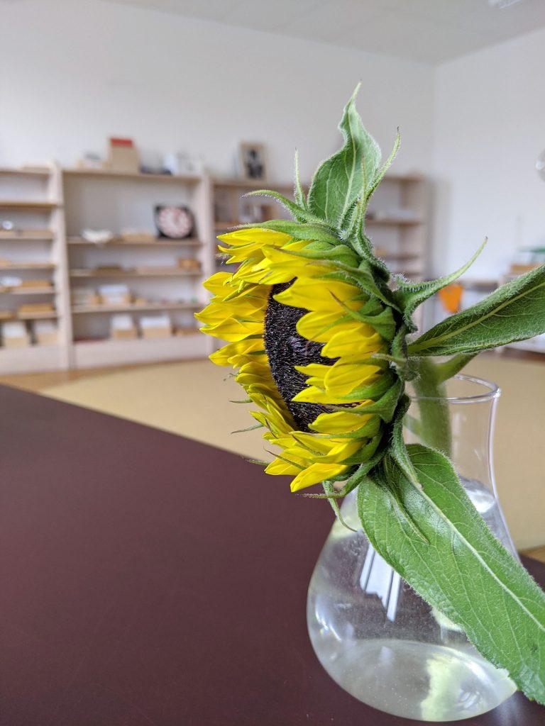 Montessori-Schule Erfahrungsbericht