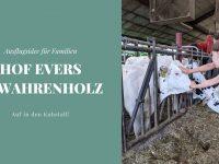 Auf in den Kuhstall: Hof Evers in Wahrenholz als Ausflugsidee