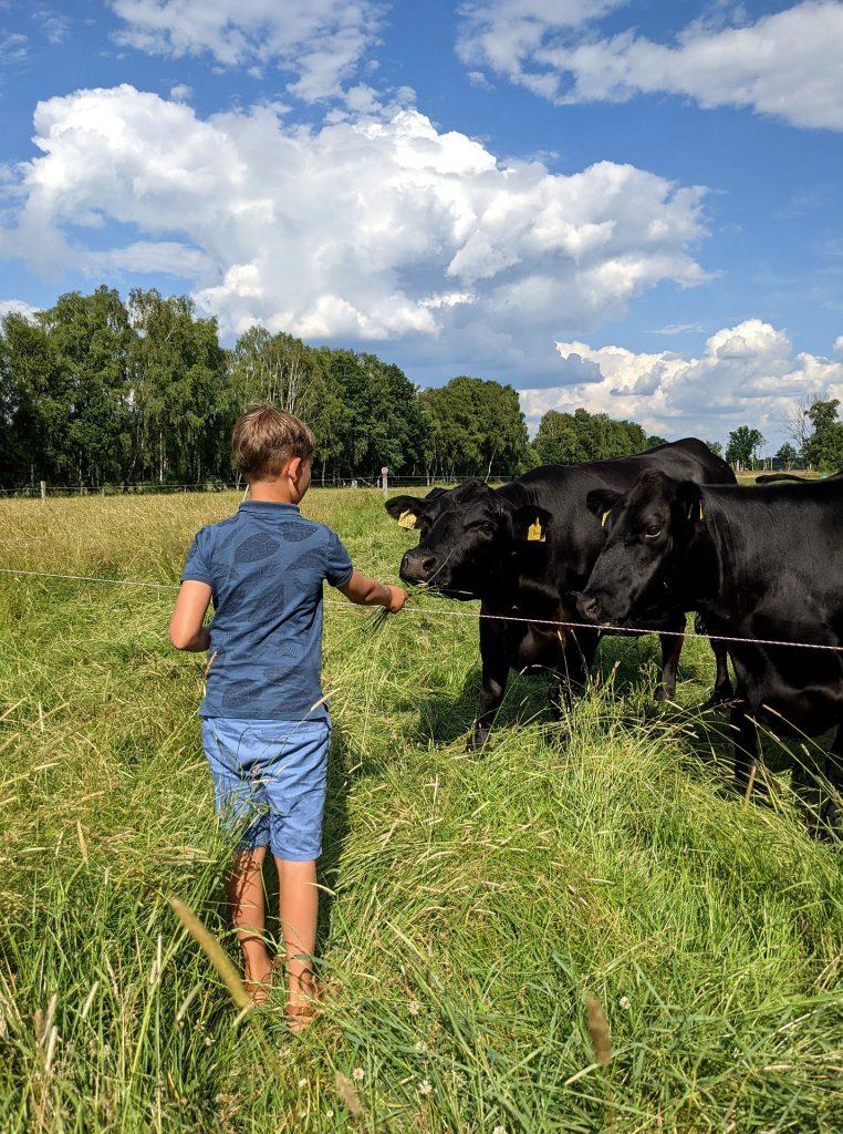 Sommerferien Ideen mit Kindern