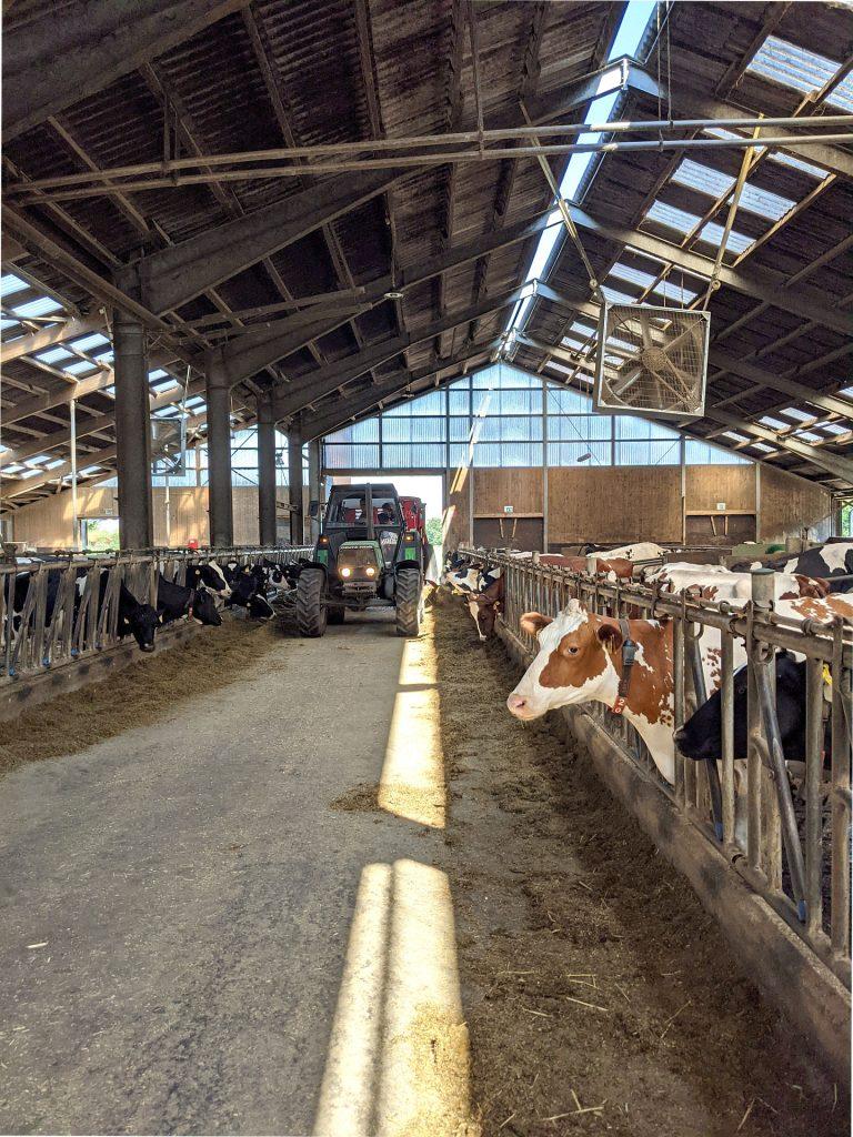 Milchviehbetrieb Niedersachsen
