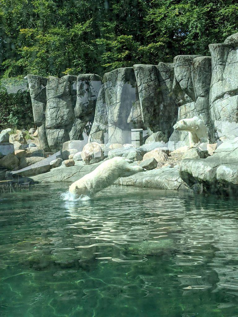 Lohnt sich der Zoo Aalborg