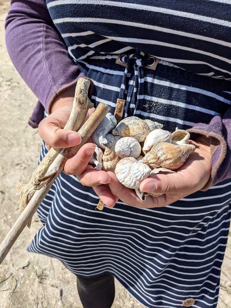 Muscheln sammeln Fanø