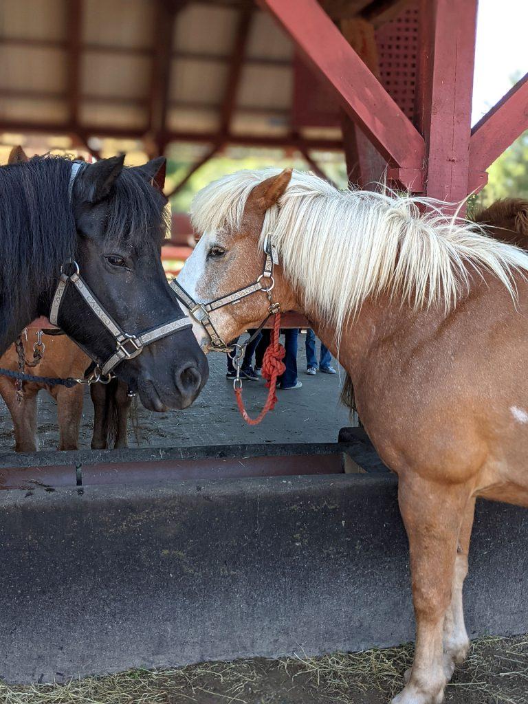 Nordjütland Ponyspaziergang Kinder