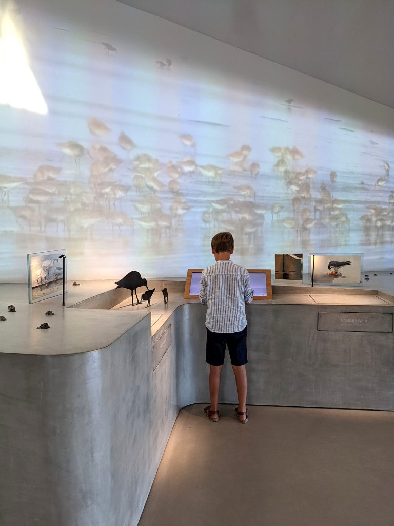 Wattenmeerzentrum Ribe Erfahrungen